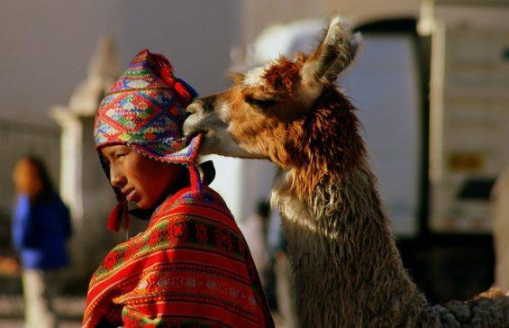 llama-pic-by-whl-travel