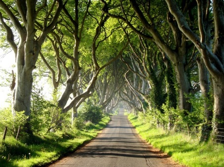 dark-hedges-3[2]